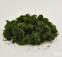 Muschio EDG Lichene Verde Scuro 1Kg
